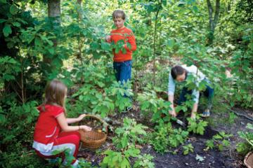 Patti Roads, right, took her nephew Timmy Welch and niece Emma Strachan foraging for sassafras in a low-canopy forest in West Tisbury.